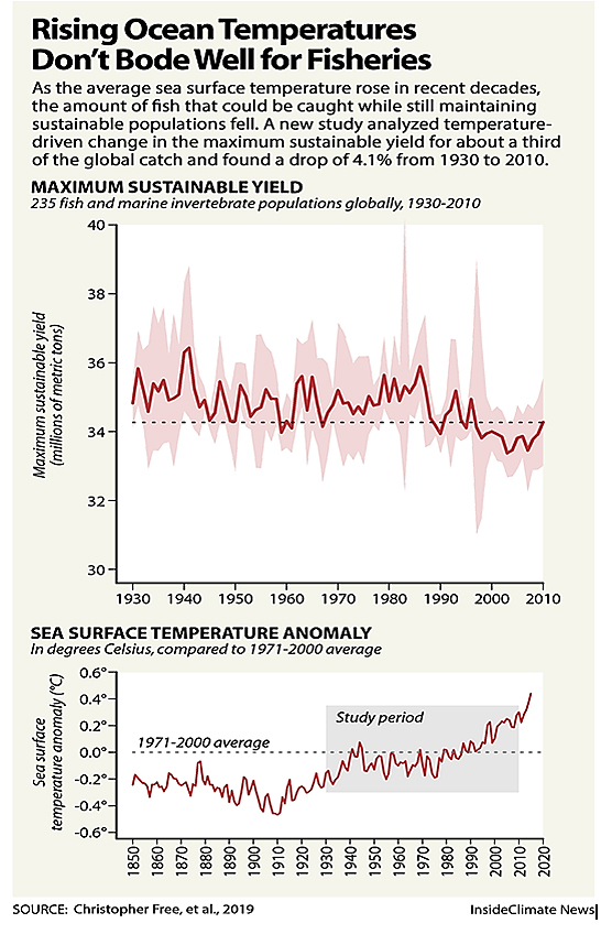 Rising Ocean Temps And Fish Graph
