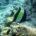 Morrish Idol Mk Reef