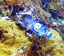 Plastic Reef Bottle