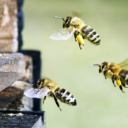 Bees 2