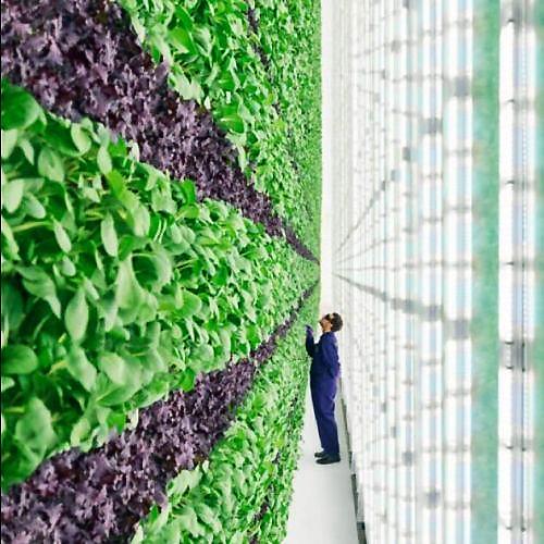 Vertial Farming 1